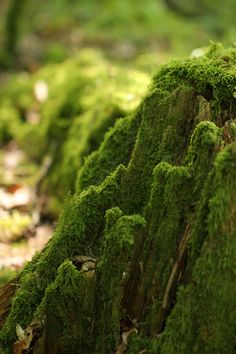 moss covered tree stump  | nature photography