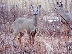 Deer Me by ytvrci.deviantart.com on @deviantART