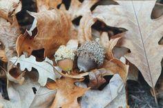 Fall on film