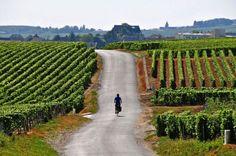 Fietsen door de wijngaarden nabij Montagne de Reims - Champagne-Ardenne | via @frankr