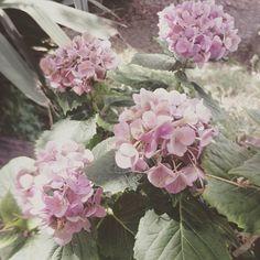 I fiori di Crespina. L'estate dona loro quell'invecchiamento così classico... mi piace.  #fiori #fiore #giardino #garden #Crespina #Toscana #Tuscany #Italy #Italia #instaitalian #instaitalia #igers #igtoscana #natura #nature #igfunny #funny #domenica #sunday