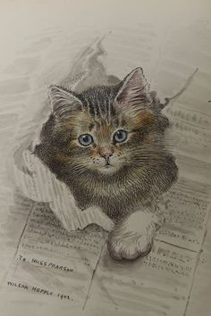 1902 Kitten Trade Card