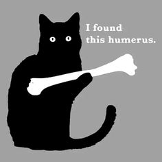 Funny t-shirts, hoodies and tank tops updated with new designs every week. Shop our huge collection of awesome, cool, and hilarious pop culture, nerd humor and overall funny designs today. Funny Cat Fails, Funny Cats And Dogs, Funny Cat Memes, Cute Cats, Funny Animals, Cute Animals, Funny Kittens, Adorable Kittens, Dumb Jokes