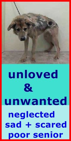 SAFE 1/21/15 (by Ready for Rescue) --- SUPER URGENT 1/18/15 Manhattan Center   ANTHOULA - A1025795  I am an unaltered female, tan and black Collie - Smooth mix.  The shelter staff think I am about 10 years old.  I weigh 36 pounds.  I was found in NY 10035.  I have been at the shelter since Jan 18, 2015. https://www.facebook.com/Urgentdeathrowdogs/photos/pb.152876678058553.-2207520000.1421674713./946487565364123/?type=3&theater