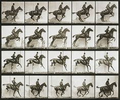 """Eadweard Muybridge Photo, Vintage Motion Study, """"Jumping Horse, Rider"""" by FineArtLosAngeles on Etsy History Of Photography, Animal Photography, Sequence Photography, Motion Photography, Wildlife Photography, Fine Art Photo, Photo Art, Eadweard Muybridge, Bay Horse"""