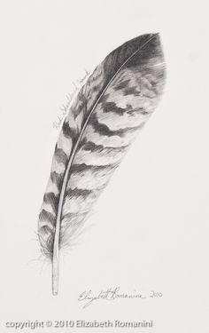 Turkey Feather Drawing The natural Feather Sketch, Feather Drawing, Wings Drawing, Feather Art, Pencil Sketch Drawing, Pencil Drawings, Art Drawings, Red Tail Hawk Feathers, Bird Feathers