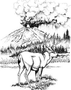 f58bdc9e47c2381920b65eab642b3b2d  busy beaver animal themes also hunting coloring pages the bow hunting also e0babb61efb9be90ce345e0a8381b745  mule deer govt mule together with  on mule deer coloring pages blacktail hunting sheets animal printable