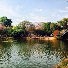 Parque do Ibirapuera - SÃO PAULO / Brasil