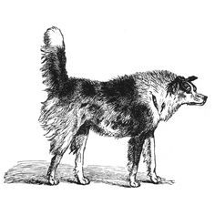 Image via Wikimedia Commons