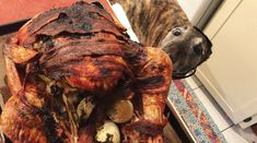 29 Dogs Ready To Celebrate Thanksgiving With You! [PICTURES]