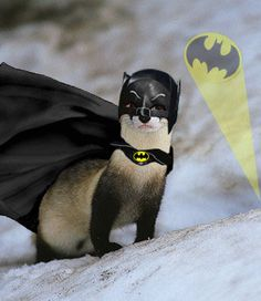 ferret in costume - Google Search
