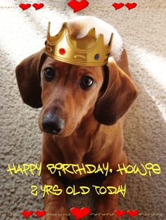 Today is Howie Long Dawg's birthday.. he's two!  <3 <3 <3  My sweet baby....