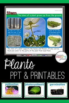 This informational PowerPoint slideshow comes with printable materials for teaching kindergarten and first grade students about plant life cycles, needs, and parts. This set includes a planting journal, vocabulary posters, and more! Teaching Themes, Teaching Writing, Teaching Resources, Language Arts Worksheets, Reading Comprehension Passages, Plant Information, Informational Writing, Kindergarten Science, Life Cycles