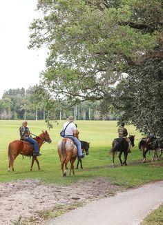 Robbins Preserve (Robbins Lodge Park), Davie, Florida. An equestrian park ~ Timeless Elegance by Desiree photography