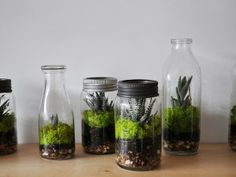 Terrariums a great accessory to your house