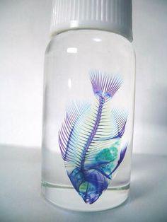 透明標本の画像 プリ画像