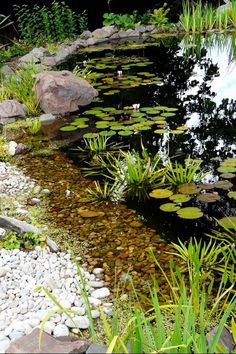 pond landscaping If the springlike weather in February is making you think about building a pond this year here are some basic tips. If its a wildlife pond you want a third of it to be very shallow 10 cms or so and none of. Backyard Water Feature, Ponds Backyard, Garden Ponds, Backyard Waterfalls, Fish Ponds, Ponds For Small Gardens, Small Ponds, Water Pond, Water Garden