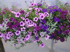 foto bloembakken