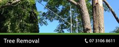 Affordable Tree Removals In Brisbane