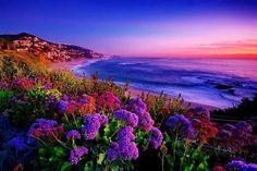(40) Twitter Beautiful Morning, Beautiful Sunset, Beautiful World, Beautiful Places, Beautiful Scenery, Beautiful Flowers, Lupine Flowers, Beach Flowers, Flowers Nature