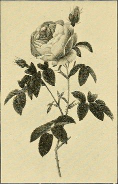 """Image from page 460 of """"Sun dials and roses of yesterday; garden delights which are here displayed in every truth and are moreover regarded as emblems"""" (1902) 
