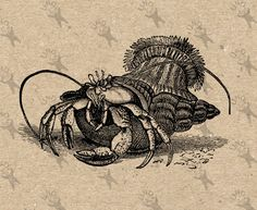Vintage Hermit crab Crawfish retro drawing image Instant Download Digital printable clipart graphic fabric transfer burlap iron on t shirt by UnoPrint on Etsy