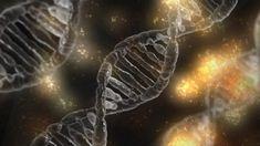 Human Dna, Human Genome, Dna Transcription, Molecular Genetics, Gene Therapy, Gene Expression, Stress, Growth Hormone, Dna Test