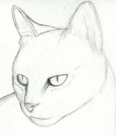 how to draw a cat head, draw a realistic cat step 3