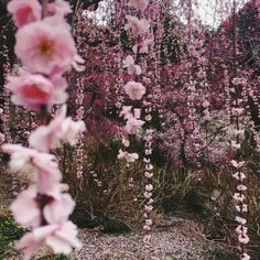 Image about pink in Juno by space cowgirl on We Heart It - Photography, Landscape photography, Photography tips Spring Aesthetic, Nature Aesthetic, Flower Aesthetic, Aesthetic Gif, Aesthetic Pictures, Aesthetic Wallpapers, Aesthetic Vintage, Beige Aesthetic, Fantasy Magic