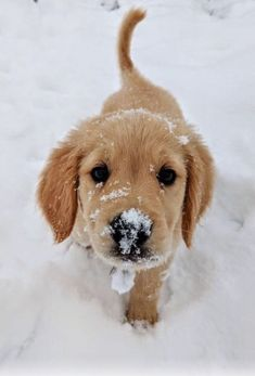 @Ddolphine (WeHeartIt ) @Sumear (Pinterest ) cute | Puppy | Dog | animal | pets