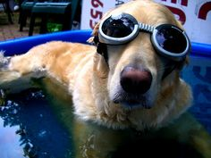 15 Reasons Why Golden Retrievers Are The Best Dogs Ever