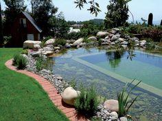 задний двор-естественно-бассейн-14
