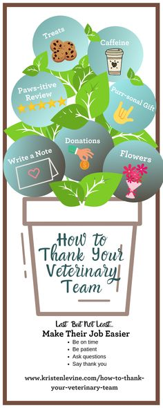 A great veterinary team should never be taken for granted. Here are a few easy ways to say thank you to the people who help us keep our pets healthy. Cat Pee Smell, People Who Help Us, Cat Plants, Cat Shedding, Edible Arrangements, Beautiful Cat Breeds, Baby Kittens, Pet Health, Health Tips