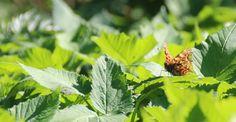 Butterfly:)  See more; http://elamakameramaailma.blogspot.fi/