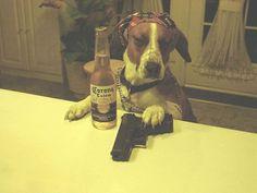 gangster dogs | gangster_dog_3