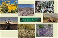 Flora y fauna en la zona del silencio reserva de la biosfera en Durango MEXICO.