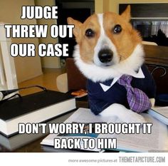 Lawyer dog never quits!
