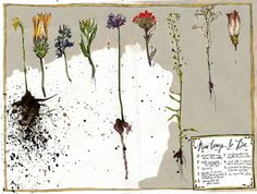 Wendy Macnaughton  Nine Ways To Die, 2010  Ink and Watercolor on Paper