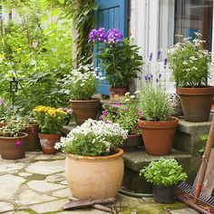 Want to dress up your patio with containers of bright, beautiful plants? All you need to do is read through a little research here on the best patio plants, from hydrangeas to lavender and even strawberries! Landscaping Tips, Garden Landscaping, Back Gardens, Outdoor Gardens, Pot Jardin, Patio Plants, Container Flowers, Dream Garden, Garden Inspiration