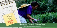 Next Flowers, Growing Flowers, Planting Flowers, National Days, National Holidays, Bulbs And Seeds, National Day Calendar, Seed Packaging, Seed Catalogs