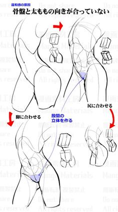 how to draw, tutorial, ass / 股間周りの描き方:違和感と修正法⑤ - pixiv Body Reference Drawing, Body Drawing, Art Reference Poses, Anatomy Reference, Body Anatomy, Anatomy Art, Anatomy Drawing, Art Poses, Drawing Poses