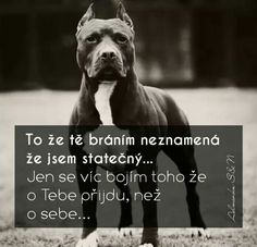 Psi, Best Quotes Ever, My Fantasy World, Dog Quotes, True Words, Motto, Good To Know, Baby Love, Animals And Pets
