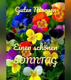 Happy Sunday, German, Good Day, Good Night Love Images, Good Morning Images, Happy Birthday Wishes, Deutsch, German Language
