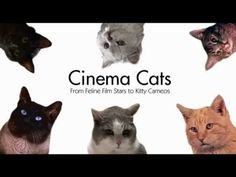 Murder of a Cat (2014) | Cinema Cats
