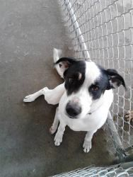 STILL AVAILABLE***Sunshine URGENT! is an adoptable Terrier Dog in Cadiz, OH. SUNSHINE is about 4 years old, is friendly and housetrained, knows how to sit on command. He is up for adoption now to a new loving home. HA...