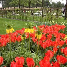 Keukenhof blomsterpark Nederland by livholberg