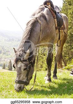 """Grey Horse""- Horse Stock Photo from Gograph.com Horse Horse, Horses, Horse Photos, Art Images, Clip Art, Stock Photos, Grey, Illustration, Pictures"
