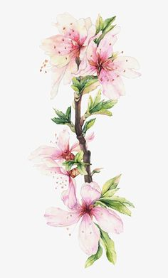 Flower Drawing Watercolor Illustrations of blooming branches - Art And Illustration, Botanical Illustration, Watercolor Illustration, Flower Branch, Flower Art, Flower Images, Watercolor Flowers, Watercolor Paintings, Watercolour
