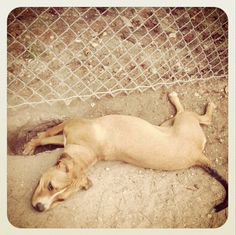 Some dogs dig to escape their confines Dog Proof Fence, Dog Fence, Dog Run Side Yard, Stop Dogs From Digging, Diy Dog Run, Dog Chart, Basic Dog Training, Dog Varieties, Dog Rules