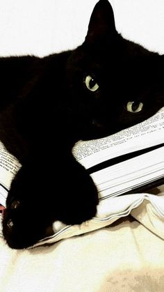 black #cat #library #blackcatsrule